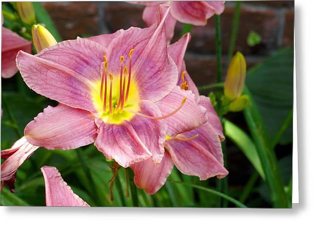 Violet Art Greeting Cards - The Garden Violet Lily Greeting Card by Mike McGlothlen
