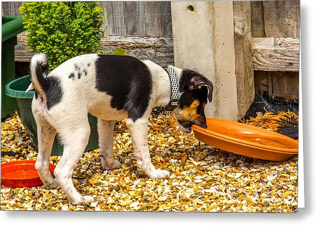 Doggies Greeting Cards - The Gardner Greeting Card by Richard Simpson