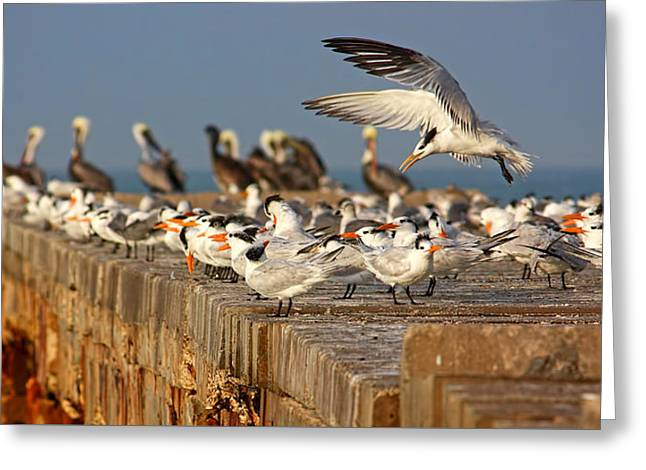 Ocean Art Photography Greeting Cards - The Gathering Greeting Card by HH Photography