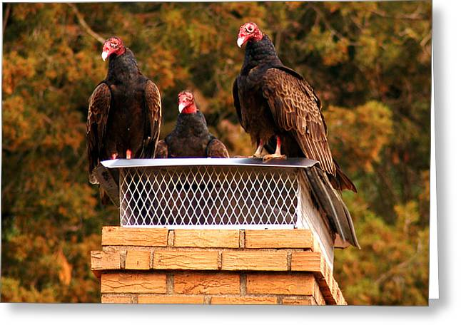 Turkey Buzzard Greeting Cards - The Gathering of Vultures Greeting Card by Clayton Bruster