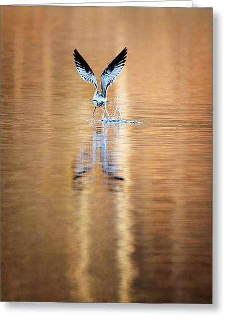 Reflection Photographs Greeting Cards - The Gift of Flight Greeting Card by Bill Wakeley