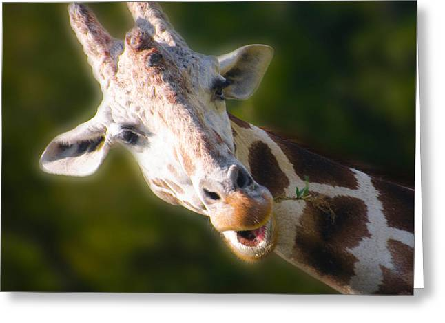 The Giraffe Greeting Card by Bill Cannon