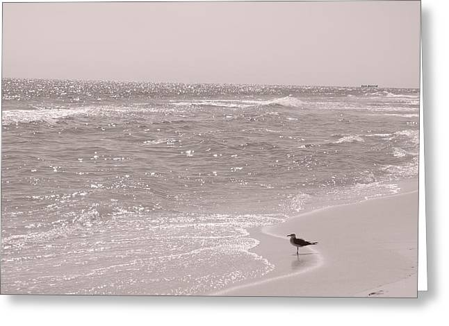 Beach Photography Greeting Cards - The Glimmering Sea Greeting Card by Henry Happeny