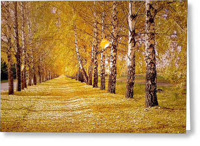 Fall Grass Greeting Cards - The Golden Birch Alley Greeting Card by Lana Art