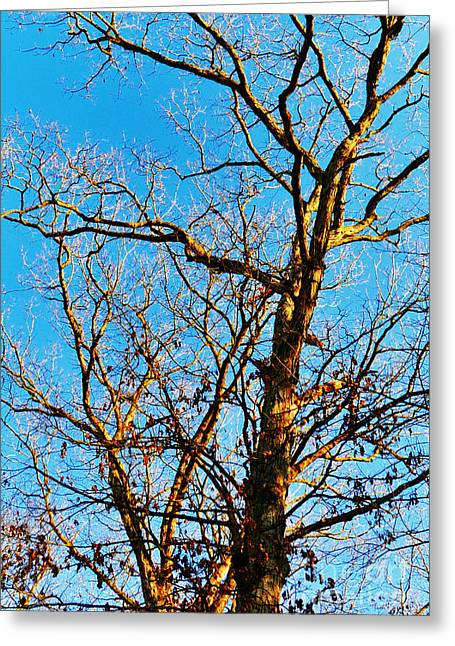 Large Poster Greeting Cards - The Golden Hour - Autumn Greeting Card by Gerlinde Keating - Keating Associates Inc