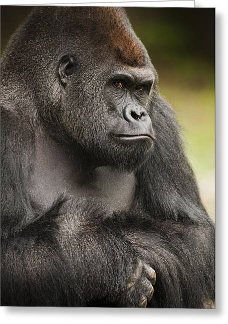 Facial Expression Greeting Cards - The Gorilla Look Greeting Card by Chad Davis