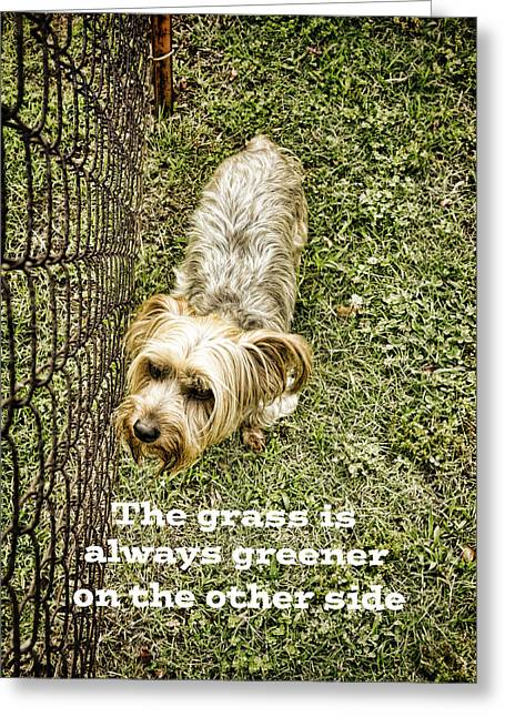 Dog Photographs Greeting Cards - The Grass Is Always Greener Quote - photography Greeting Card by Ann Powell