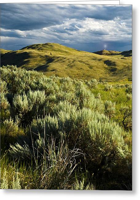Du Bois Greeting Cards - The Grasslands Greeting Card by Peter Olsen