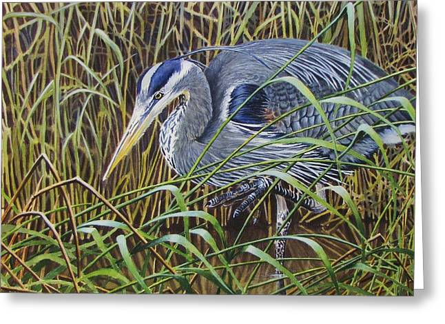 Wader Greeting Cards - The Great Blue Heron Greeting Card by Greg Halom
