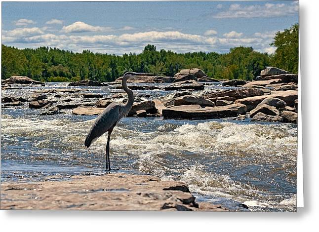 Sea Animals Greeting Cards - The Great Blue Heron in tumultuous river Greeting Card by Asbed Iskedjian