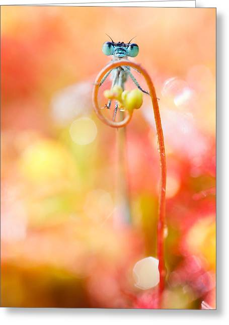 Damselflies Greeting Cards - The Great Escape Greeting Card by Roeselien Raimond