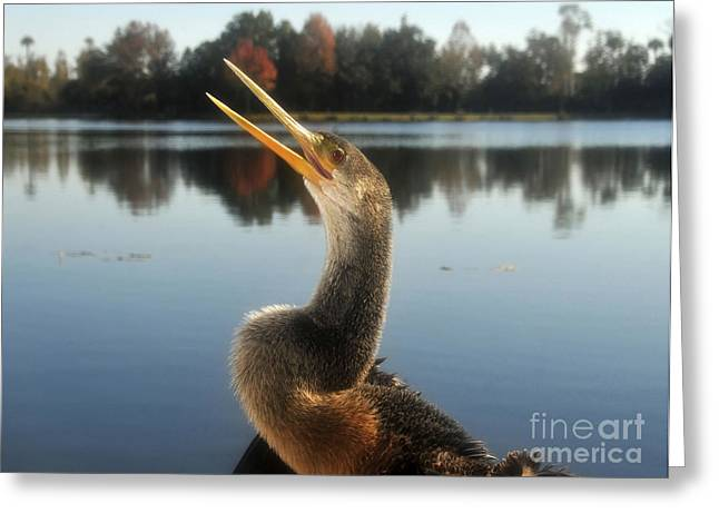 Anhinga Greeting Cards - The Great Golden Crested Anhinga Greeting Card by David Lee Thompson