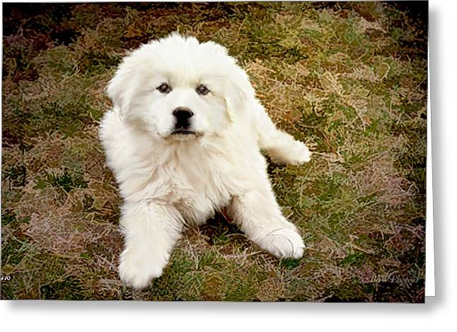 Puppy Digital Art Greeting Cards - The Great Pyranise Puppy Greeting Card by Bonnie Willis
