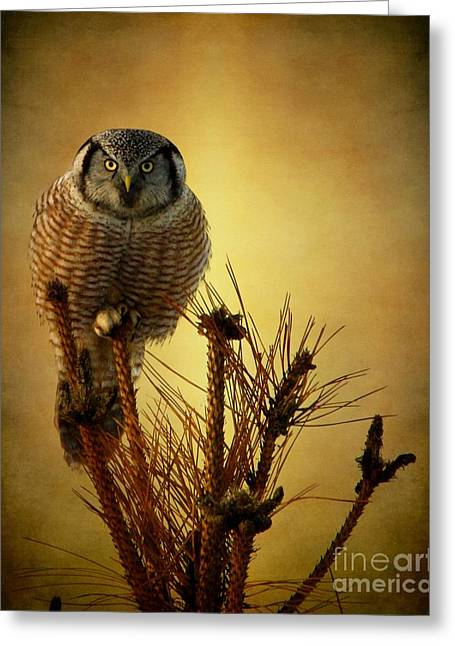 Farmers Field Greeting Cards - The great stare down Greeting Card by Heather King