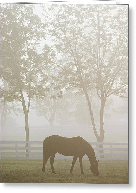 The Great Thoroughbred Gelding Forego Greeting Card by Raymond Gehman