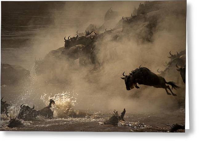 Mara Greeting Cards - The Great Wildebeest Migration Greeting Card by Adrian Wray