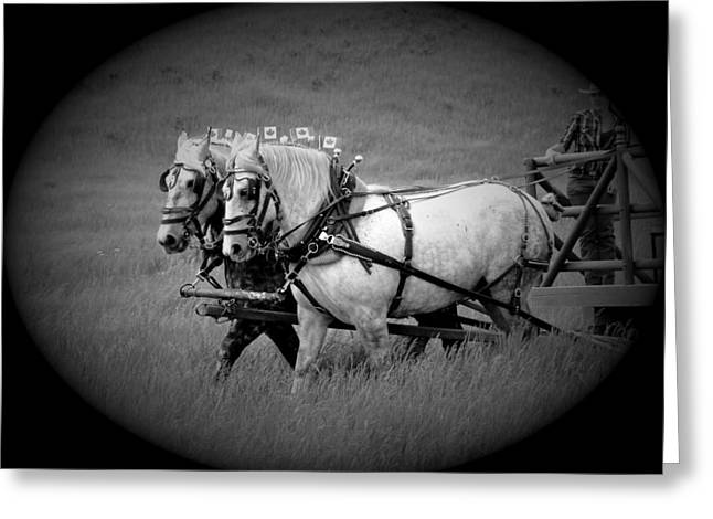 Horse Pulling Wagon Greeting Cards - The Grey Team - Bar U Ranch Greeting Card by Al Bourassa