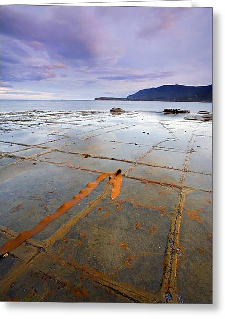 Grid Photographs Greeting Cards - The Grid Greeting Card by Mike  Dawson