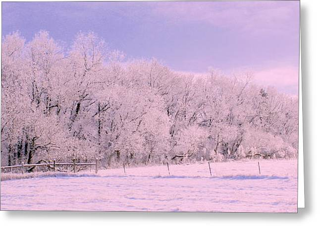 Snowy Day Greeting Cards - The Grove Greeting Card by Julie Lueders