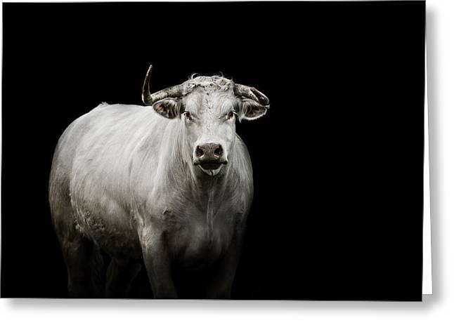 Cattle Photographs Greeting Cards - The Guardian Greeting Card by Paul Neville