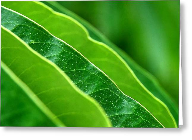 Green Leafs Greeting Cards - The Hang Of It Greeting Card by Dan Holm
