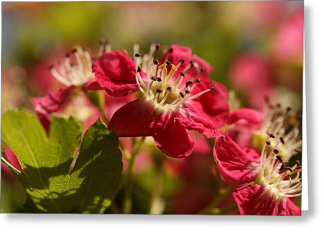 The Happy Hawthorn Greeting Card by Connie Handscomb