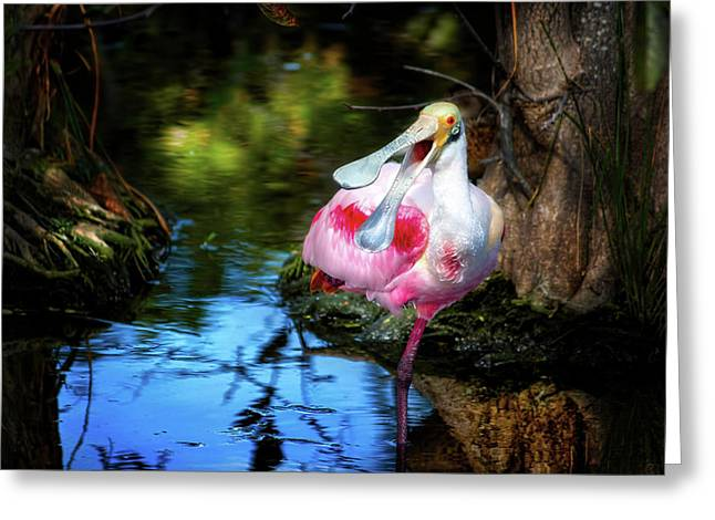 The Happy Spoonbill Greeting Card by Mark Andrew Thomas
