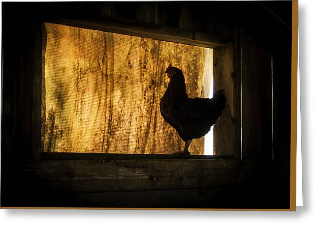 Maine Farms Greeting Cards - The Hen House Greeting Card by Jack Welch