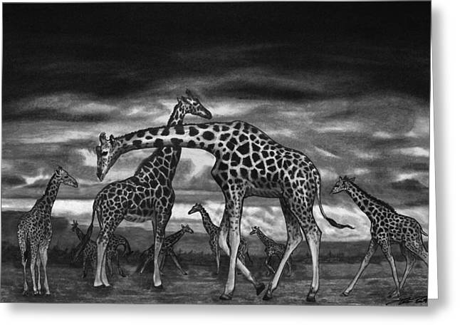 Charcoal Greeting Cards - The Herd Greeting Card by Peter Piatt