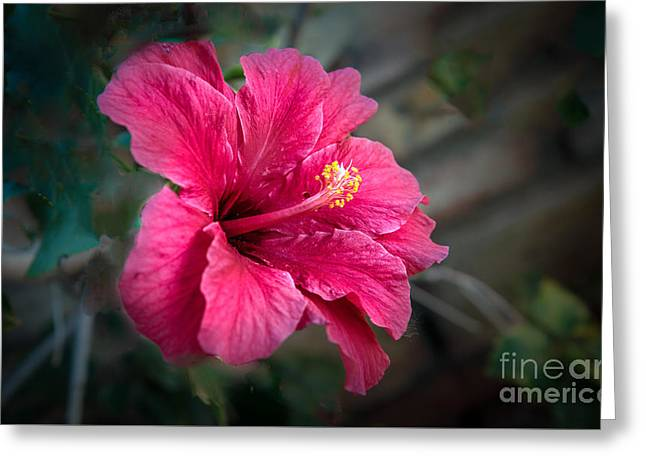 The Hibiscus Greeting Card by Robert Bales