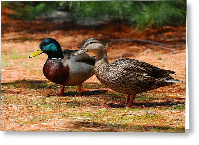 Mallards Greeting Cards - The Honeymooners - Mallard Ducks  Greeting Card by Angie Tirado