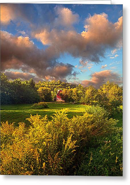 Green Leafs Greeting Cards - The Hope That Youve Forgotten Greeting Card by Phil Koch