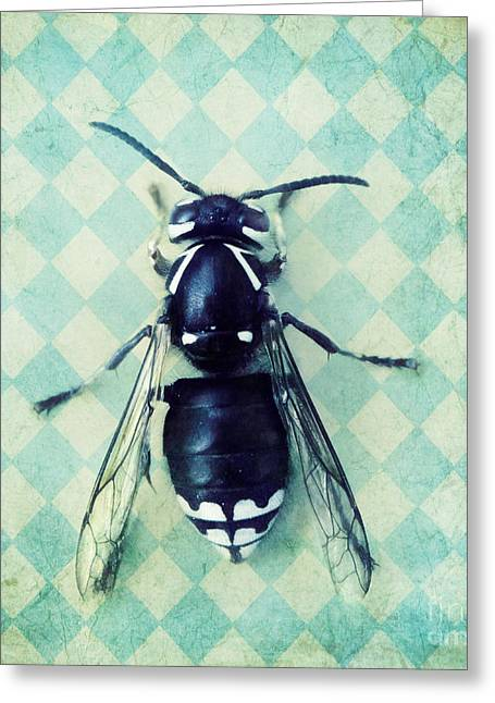 Wasp Greeting Cards - The hornet Greeting Card by Priska Wettstein