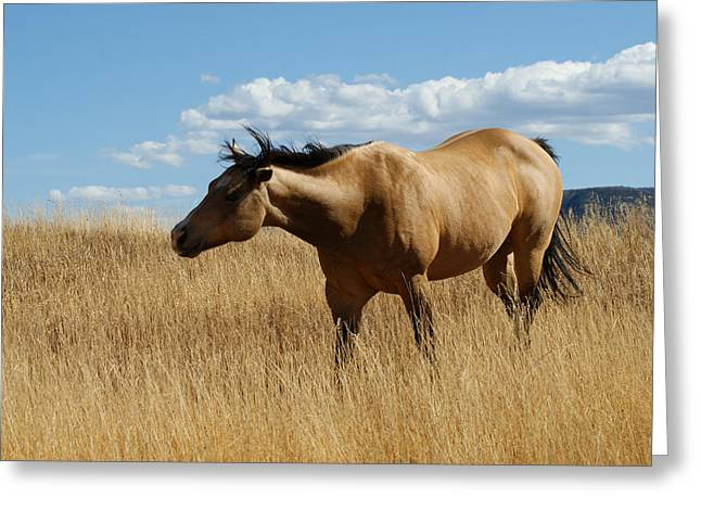 The Horse Greeting Card by Ernie Echols