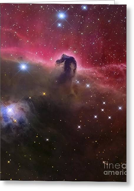 Starforming Greeting Cards - The Horsehead Nebula, Barnard 33 Greeting Card by Roberto Colombari