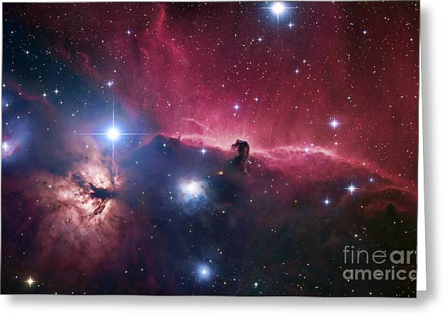 Interstellar Clouds Greeting Cards - The Horsehead Nebula Greeting Card by Robert Gendler