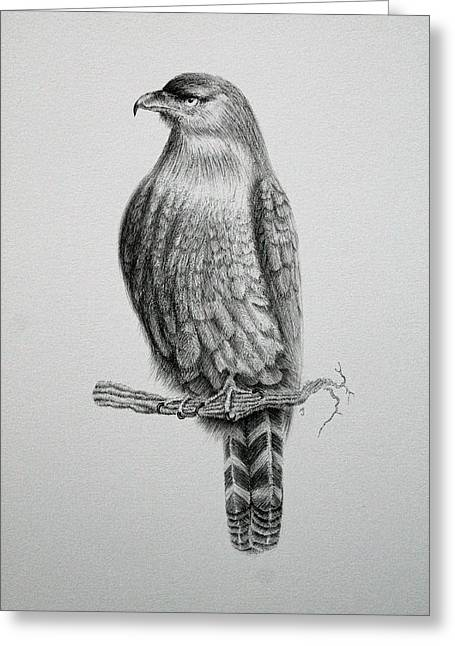 Pen And Ink Drawing Greeting Cards - The Hunter Greeting Card by Jamie Patterson