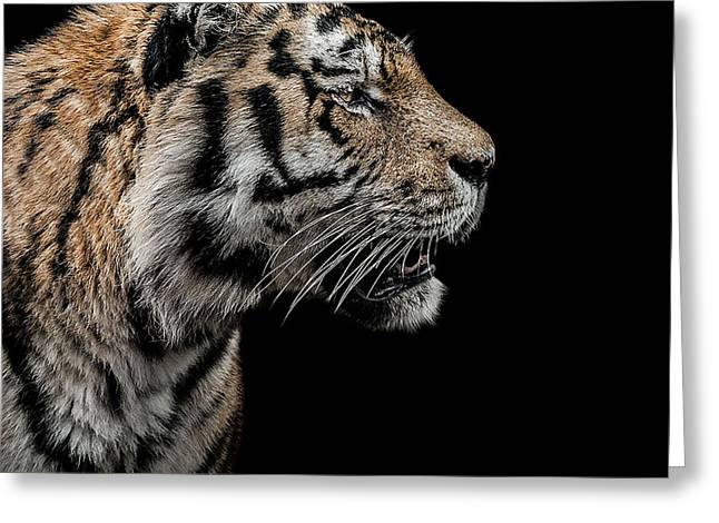 Amur Greeting Cards - The Hunter Greeting Card by Paul Neville