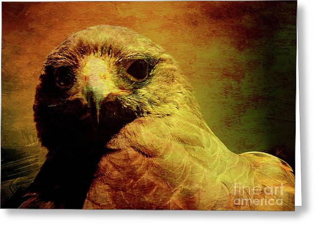 Red Tail Hawk Digital Art Greeting Cards - The Hunter . Portrait of a Hawk . Texture . 40D7877 Greeting Card by Wingsdomain Art and Photography