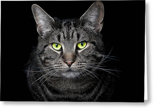 Cat Eyes Greeting Cards - The Hypnotist Greeting Card by Paul Neville