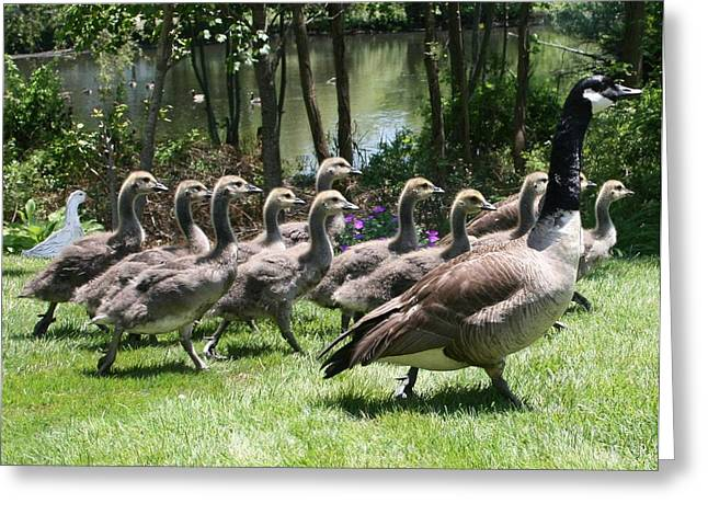 Geese Greeting Cards - The Impostor Greeting Card by Christopher Kirby