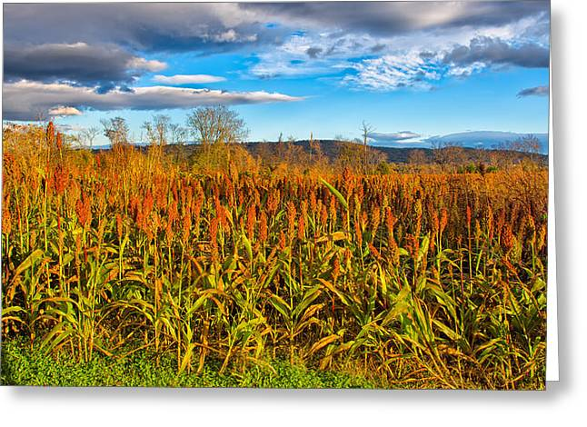 Shed Greeting Cards - The Infamous Cornfield Greeting Card by John Bailey