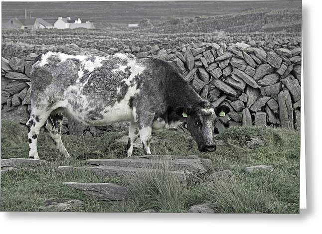 Aran Islands Greeting Cards - The Ireland Moo Greeting Card by Betsy C  Knapp