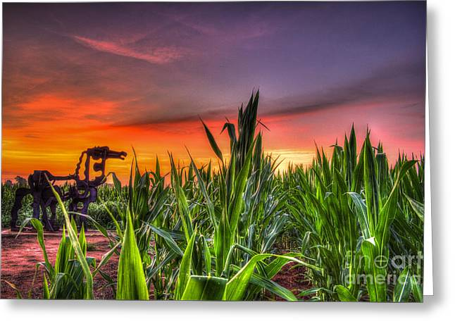 The Horse Greeting Cards - The Iron Horse Young Corn Sunrise Greeting Card by Reid Callaway
