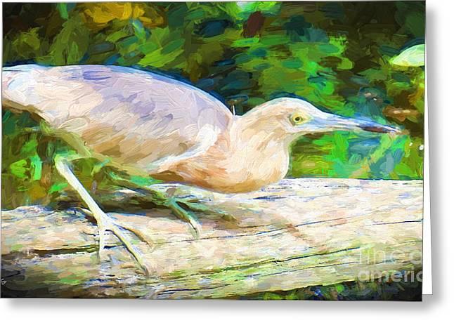 Wild Birds Greeting Cards - The Javan Pond Heron Greeting Card by Judy Kay