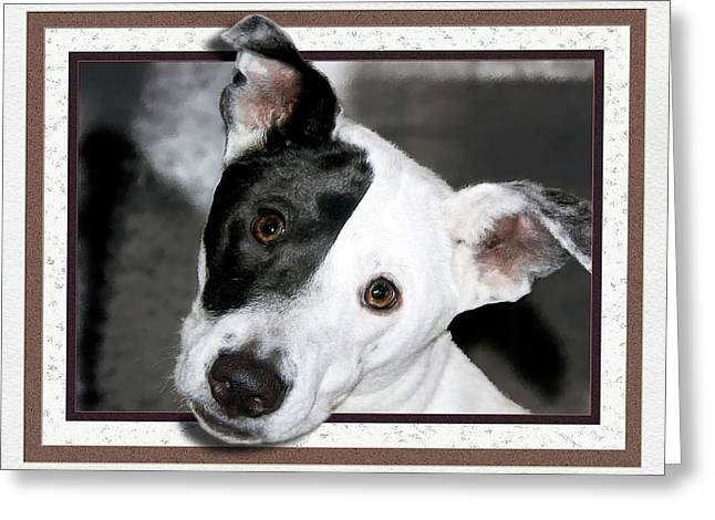 Dogs Digital Greeting Cards - The Joker Greeting Card by Harry Hunsberger