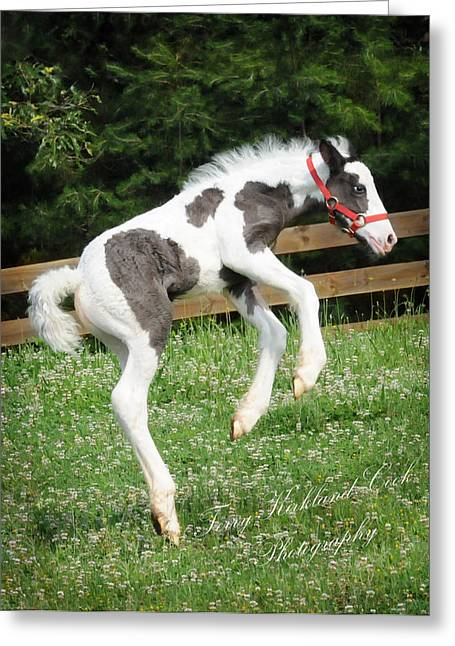 Gypsy Horses Greeting Cards - The Joys of New Life Greeting Card by Terry Kirkland Cook