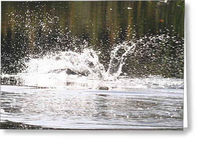 Rainbow Trout Greeting Cards - The Kill Greeting Card by John Bradburn