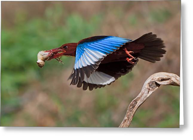 King Photographs Greeting Cards - The Killer Greeting Card by Amnon Eichelberg