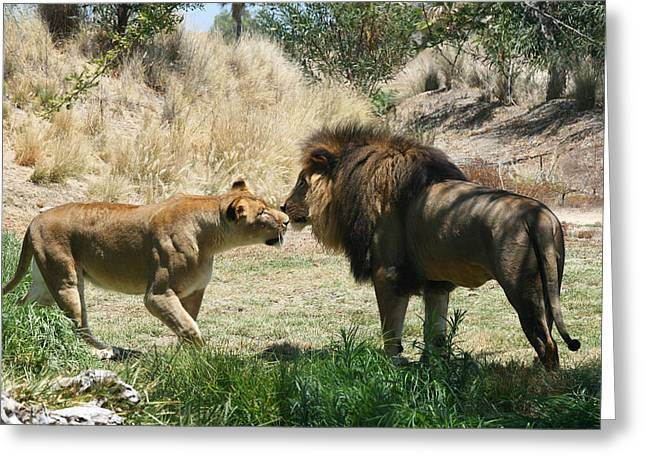 Recently Sold -  - Lioness Greeting Cards - The King and Queen Greeting Card by Mallory Harben